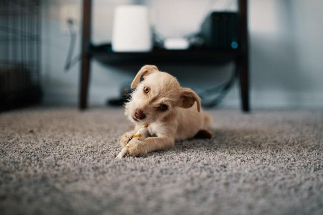 , Ako vyčistiť matrac a koberec od nelichotivých škvŕn